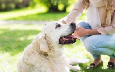 Top 5 des raisons d'avoir un chien !