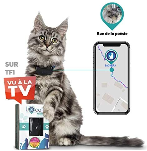 Le collier GPS chat LOCALIZ