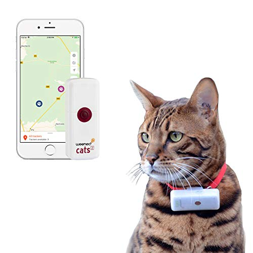 Le collier GPS chat WEENECT