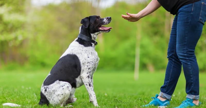 Comment dresser son chien?