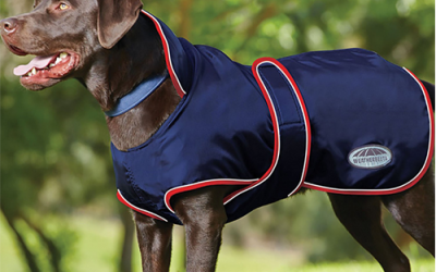 Meilleurs manteaux pour chiens